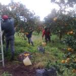 Caporalato, criminalità organizzata, sfruttamento e grande distribuzione: l'agricoltura Made in Italy.